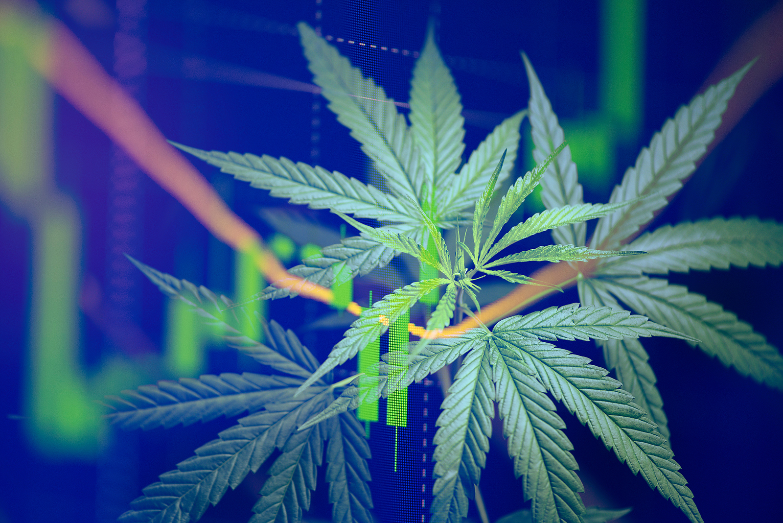 Cannabis Pot stock news and analysis