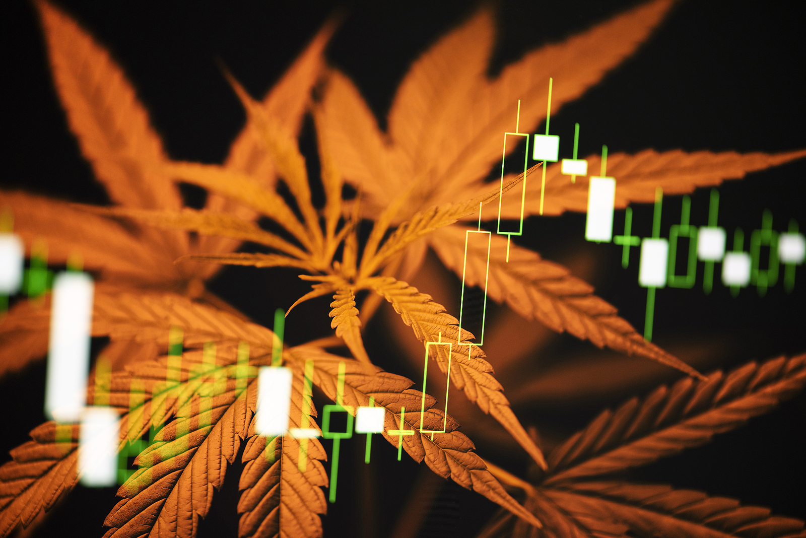 Cannabis stocks on chart