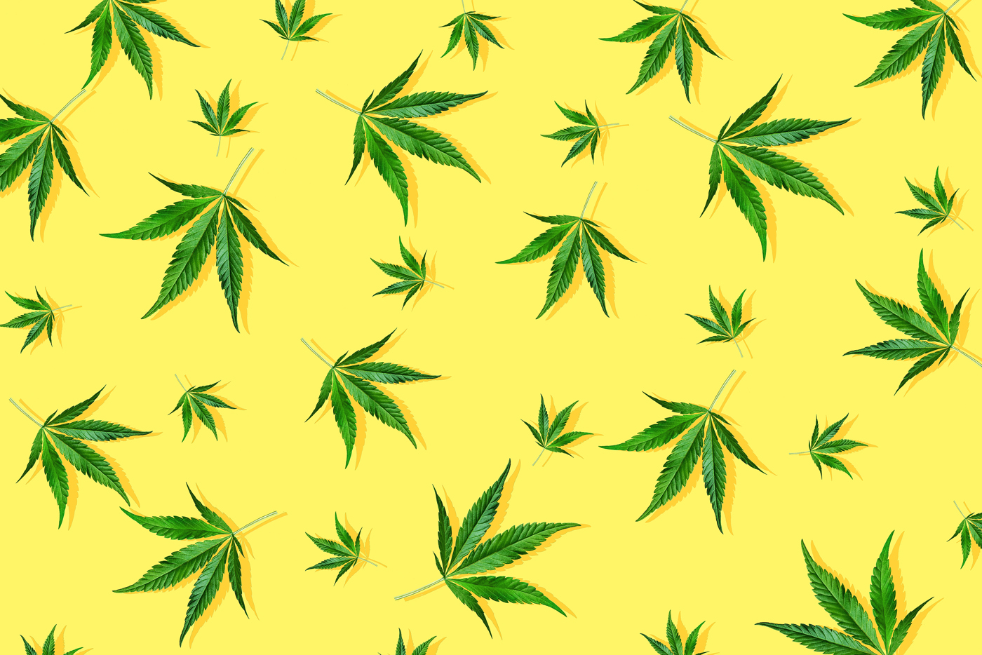 Cannabis Pot stock news and analysis