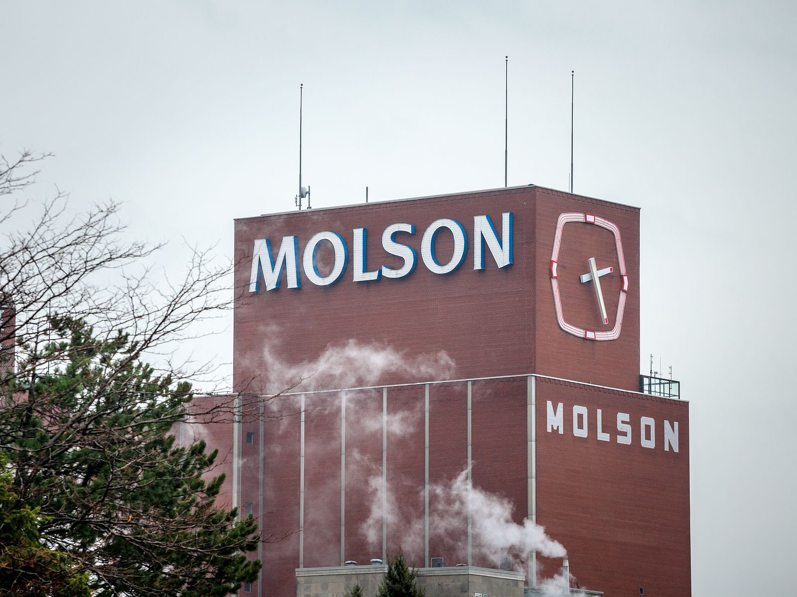 Molson Coors Beverage TAP stock
