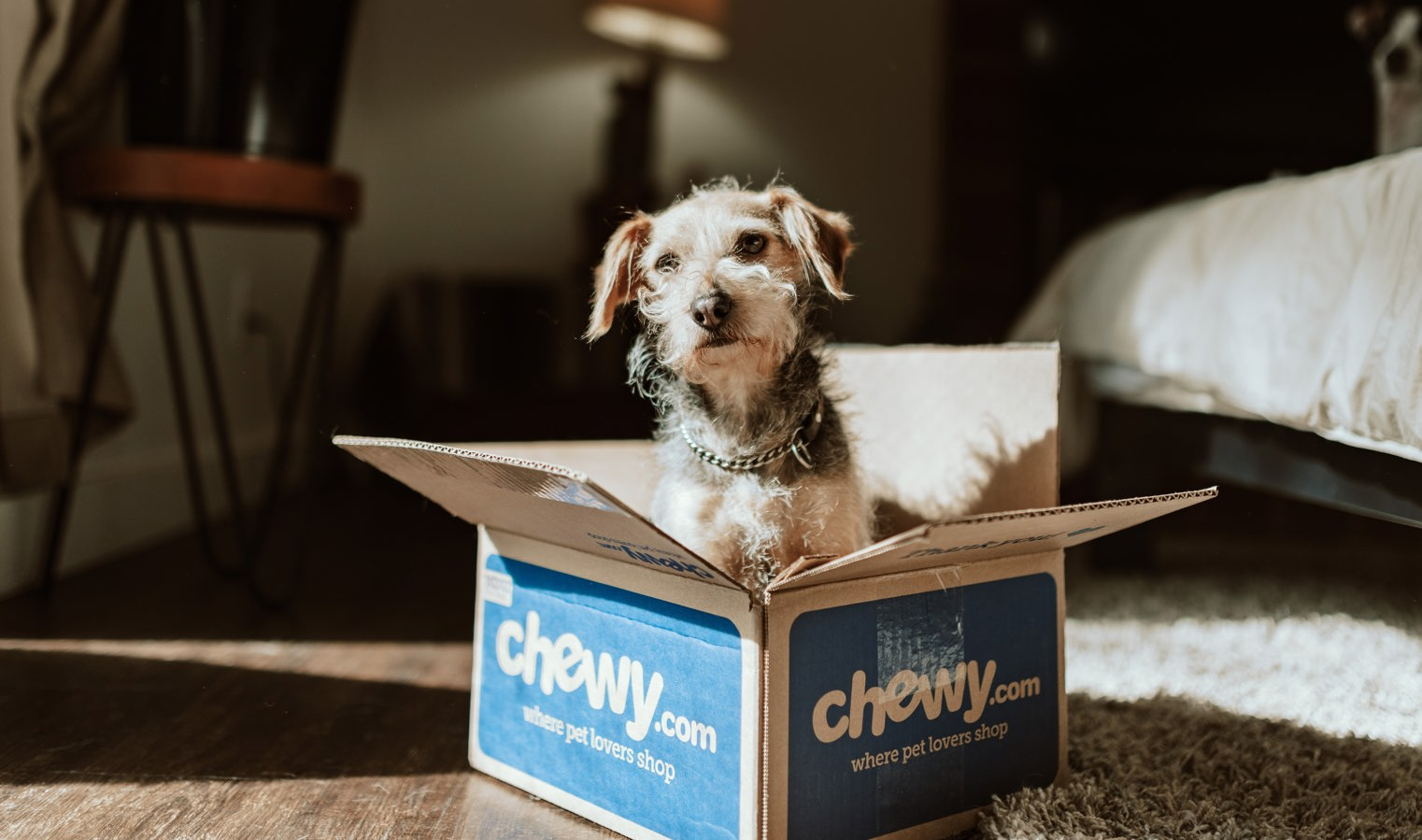 Chewy stock, CHWY stock, stock news and analysis
